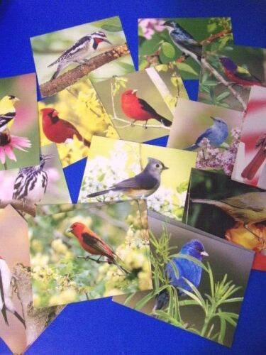 Set of ( 20 ) Greeting Cards - Dave Maslowski Birds 5.5 X 4 Inches, Blank inside