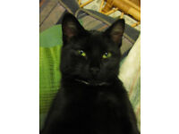 Lost black female cat.