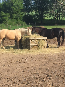 Registered Broodmares for sale/ Palomino sold pending