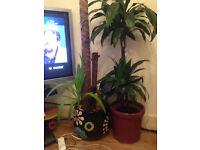 large nice plant pots