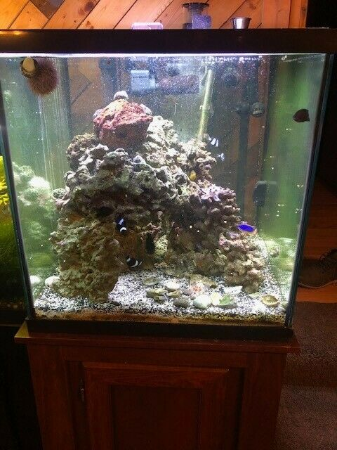 Aquarium 65 Gallon Square
