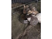 3 adorable rabbits ready to go to a new home now