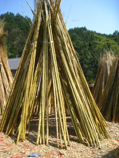 Bamboo poles for sale woodstock gumtree classifieds for Uses for bamboo canes