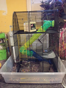 Cute dwarf hamster for sale including big 3 level cage