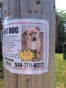 LOST DOG SIX MONTHS OLD