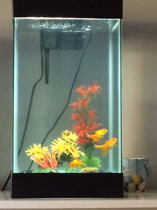 Brand new tank with 3 gold fish