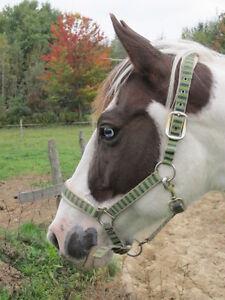 Jument paint quator horse