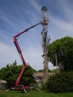 Fast, Safe & Easy TREE REMOVAL.. With The Only 90' Lift In Town
