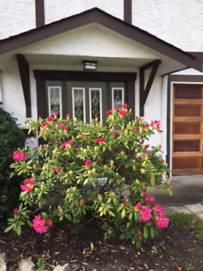$1,700 · May 1st, Bright furnished 2 bedroom suite in Gordonhead