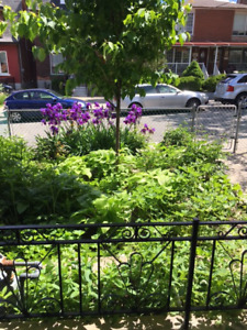 RENT 3-4 BEDROOM HOUSE IN LITTLE ITALY