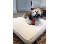 Seeking a dog sitter - daily