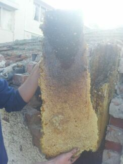 Registered beekeeper saving bees Sunbury Hume Area Preview