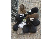 6 bunnies for sale
