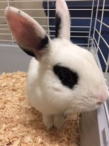 Blue - Friendly Bunny Seeking his Forever Home