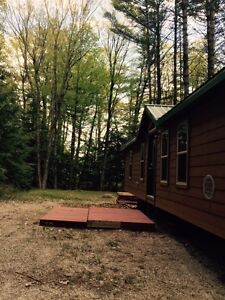 Special Pine Cabin in Muskoka Kahshe River, Pool, Park, Forest+