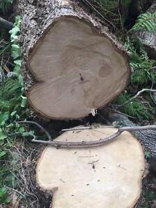 Free firewood Strathfield Strathfield Area Preview