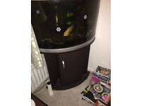 Fish tank with cabinet underneath plus one large parrot fish.