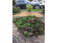free turf/soil