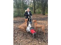 Wimbledon dog walker - it isn't just a job for me, it's a pleasure.