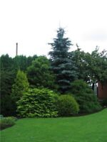 Professional Lawn and Garden Services
