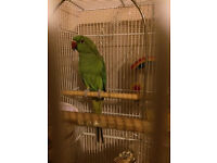 Parrot and cage.
