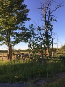 220+ Acres of Vacant Land