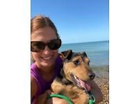 Experienced and reliable dog walker/trainer available