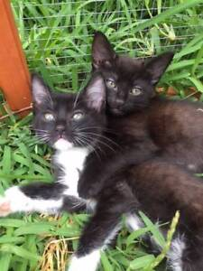 Cute, cuddly, sweet kittens ready for a forever home
