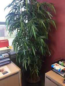 Artificial (faux) plants London Ontario image 7
