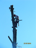 Affordable tree service, pruning, chipping, and removal