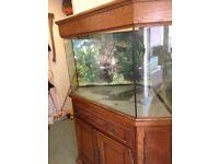Corner fish tank 140ltr on oak vaneer stand