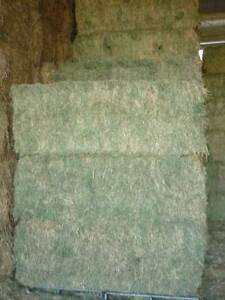 PRIME LUCERNE HAY JUMBO BALES - 8ft x 4ft x3ft approx 600+kg Hornsby Area Preview