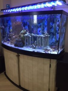 Saltwater  72 gal aquarium with livestock and equipment.