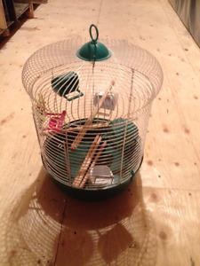 Cages pour oiseaux et accessoires
