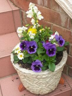 POT AND SPRING FLOWERS Wahroonga Ku-ring-gai Area Preview