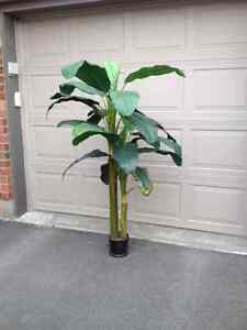 Palm Trees - Artificial - 5 Feet Tall -