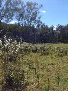 Vacant Land with  old dairy building Larnook Lismore Area Preview