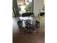 3 Indoor Plants - Money Plant, Spider Plant and Wandering Jew in Ceramic Pots. Collect from Fulham