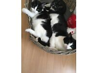 Kittens free to a good home. Have 3, but they can go separately. URGENT
