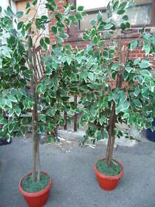 Artificial Ficus Tree in Pot, 1 Tree Available