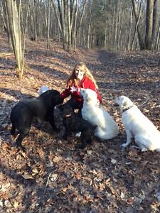Dog Sitting Private Upscale Services Book NOW for Winter