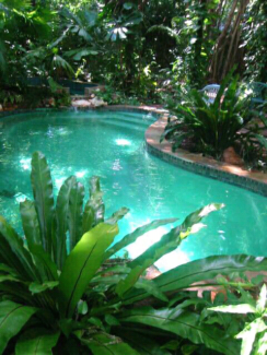 BIG TROPPO HOME.  ACRE OF RAINFOREST COCONUT GROVE. POOL.