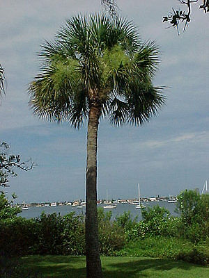 sabal for sale  Sarasota