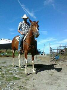 Registered Paint Mare  - FOR SALE Peterborough Peterborough Area image 3