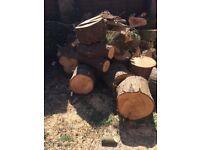 freshly cut dry logs