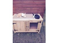 BRAND NEW RABBIT HUTCH can come with baby rabbits