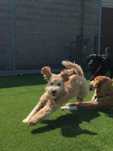 Are you looking for all day socialization/daycare for your dog?
