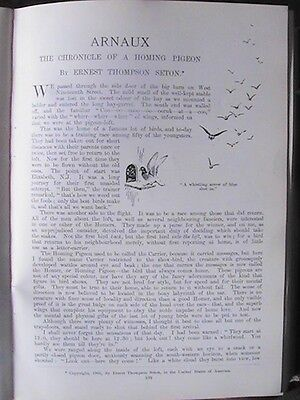 Homing Pigeon Racing Arnaux Carrier Record Feat Rare Old Antique Article 1905