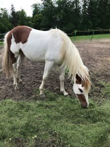Cheval Paint 2,500.00