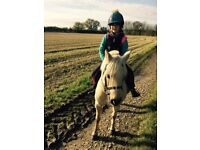 Beautiful 12hh Palomino Pony, 10 years old, Reg Welsh Section B